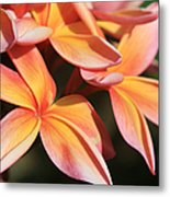 Pink Tropical Plumeria Makawao Maui Hawaii Metal Print