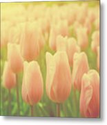 Pink Tulip Flowers In The Garden On Sunny Day In Spring Metal Print