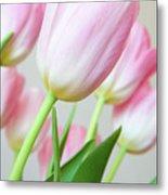 Pink Tulip Flowers Metal Print