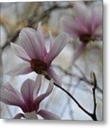 Pink Tulip Magnolias Metal Print