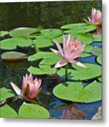 Pink Water Lilies Metal Print