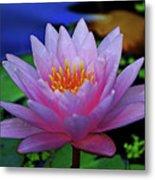 Pink Water Lily 007 Metal Print