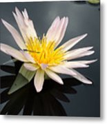 Pink Water Lily With Dragonfly Metal Print