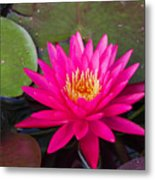 Pink Waterlily Garden Metal Print