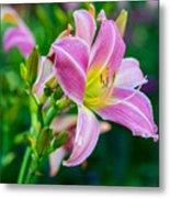 Pink White And Yellow Day Lily Metal Print