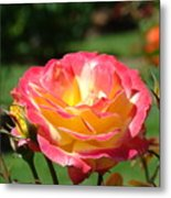 Pink Yellow Roses 3 Summer Rose Garden Giclee Art Prints Baslee Troutman Metal Print