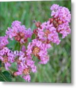 Pinkish Red Flower Bloom Close Up Metal Print