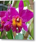 Pinkishyellow Orchid Metal Print