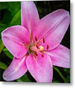 Pinkly Yours Metal Print