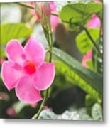 Pinks # 2 Metal Print