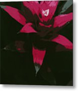 Pinky Poster Metal Print