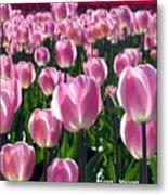 Pinky Tulips Metal Print