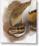 Pinstripe Pied Royal Python 01 Metal Print