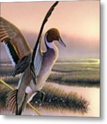 Pintail Duck-3rd Place Wi Metal Print