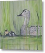 Pintails In The Reeds Metal Print