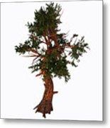 Pinus Aristata Tree Metal Print