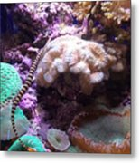 Pipe Fish And Sea Anemone  Metal Print
