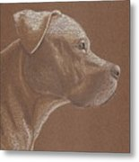 Pit Bull Metal Print by Stacey Jasmin