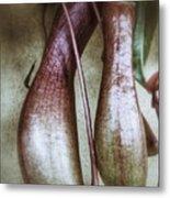 Pitcher Flower Sarracenia Metal Print