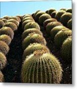 Planet Of Cactus Metal Print
