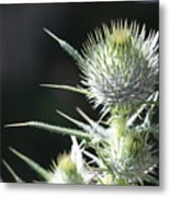 Plant 09-01-18 Metal Print