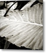Plant 8650 Metal Print