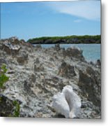 Plant And Shell On A Dominican Shore Metal Print