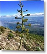 Plant On Volcano Slope Metal Print