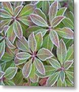 Plant Pattern Metal Print