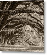Plantation Drive Live Oaks Metal Print