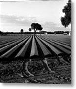 Planted Fields Metal Print