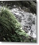 Plants By The River Metal Print
