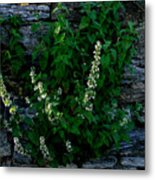 Plants Grow Anywhere Metal Print