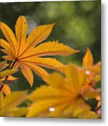Plants Of Beauty Metal Print