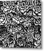 Plants Of Black And White Metal Print