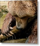 Play With Me Grizzly Metal Print