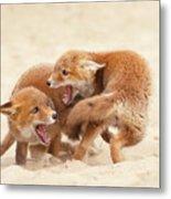Playfighting Red Fox Kits Metal Print