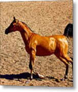 Playful Canter Metal Print