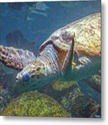 Playful Green Sea Turtle Metal Print