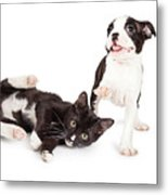 Playful Kitten And Puppy Playing Metal Print