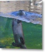 Playful Otter Metal Print
