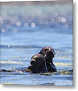 Playful Pair Metal Print
