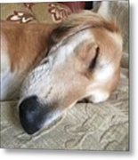 Please Be Quiet. Saluki Metal Print