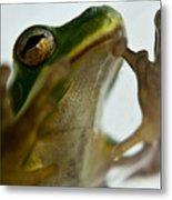 Please Not In A Frogs Eye Metal Print