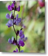Pleasing Purple Plant Picture Metal Print