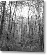 Pleasure Of Pathless Woods Bw Metal Print