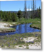 Pleated Gentians Beside Iron Creek In Black Sand Basin Metal Print