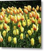 Plenty Of Tulips Metal Print
