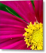 Plink Flower Closeup Metal Print