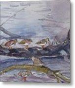 plovers in Jost VanDyke Metal Print